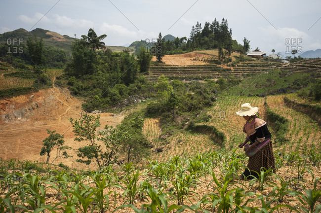 Bac Ha, Lo Cai, Vietnam - May 12, 2012: H'mong woman working in a corn field