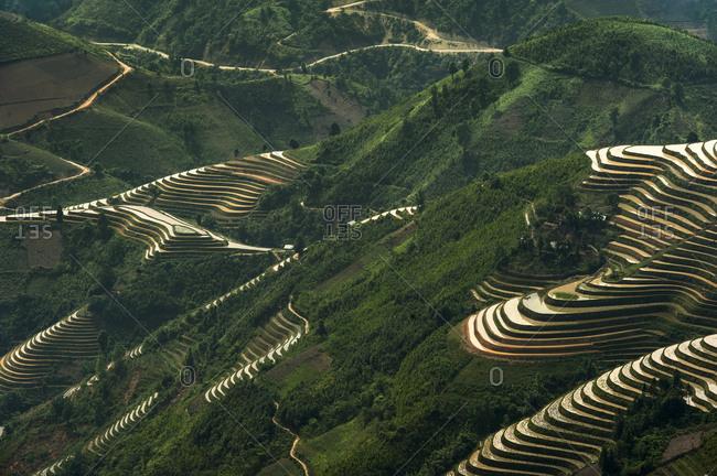 Rice terraces in northern Vietnam