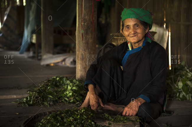 Sa Pa, Lo Cai, Vietnam - May 14, 2012: Tay woman with harvested green tea leaves