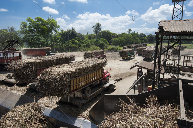 Visayan Island, Philippines - April 2, 2013: Trucks unloading sugar cane at mill