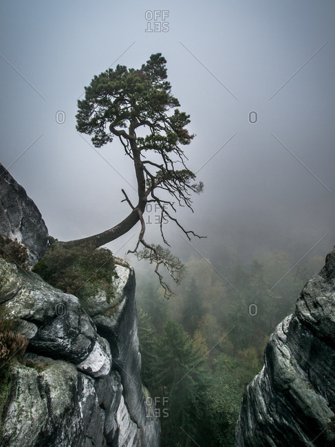Lonely Tree on the Brink of Rocks