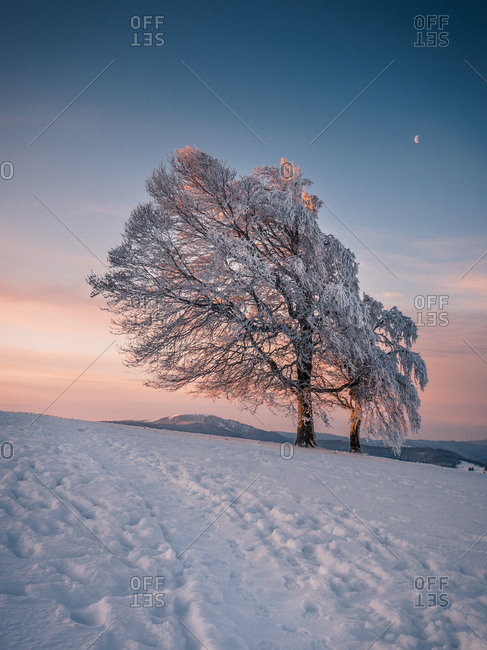 Winter Tree with Moon