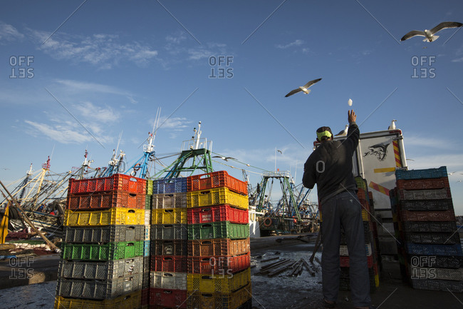 Essaouira, Morocco - March 29, 2013: Fisherman throwing ice at the seagulls in the Essaouira harbor, Morocco