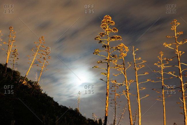 Dramatically lighted trees and the moon behind clouds