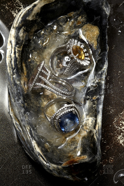 Rings on oyster shell