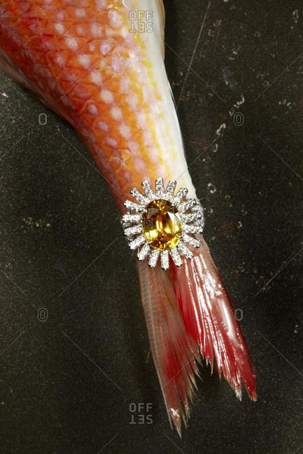 Ring on fish tail