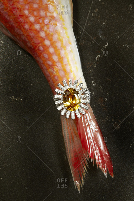 Ring on fish tail