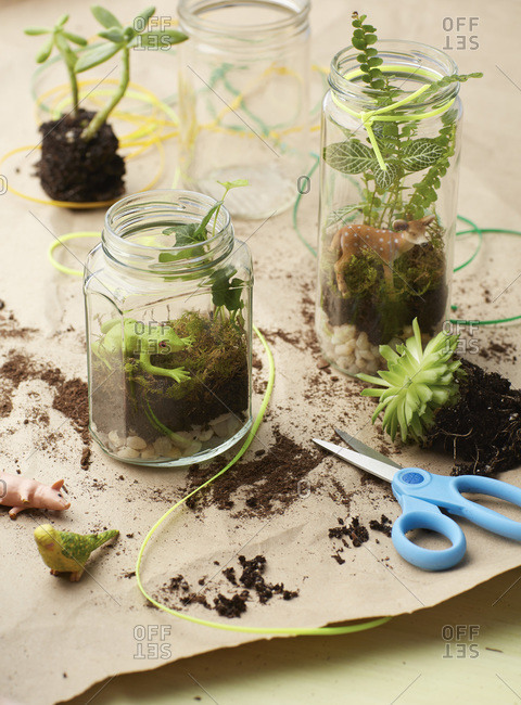 Making terrariums with toys