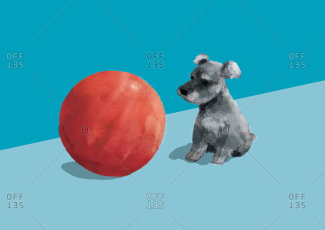 Small dog next to a red ball