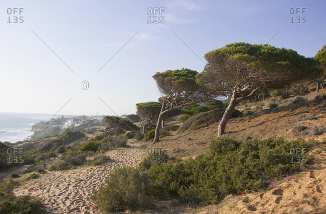 View of  village and pine trees near Atlantic ocean, Los Canos de Meca, Andalusia, Spain