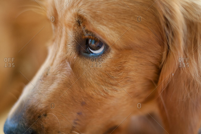 Close up of the eyes of a dog