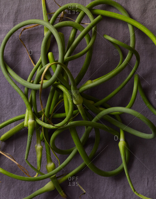 Close up of garlic scapes