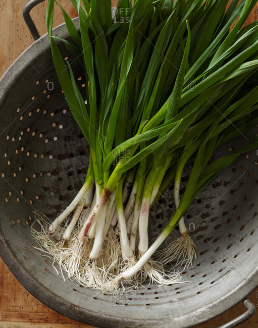 Spring onions in a strainer