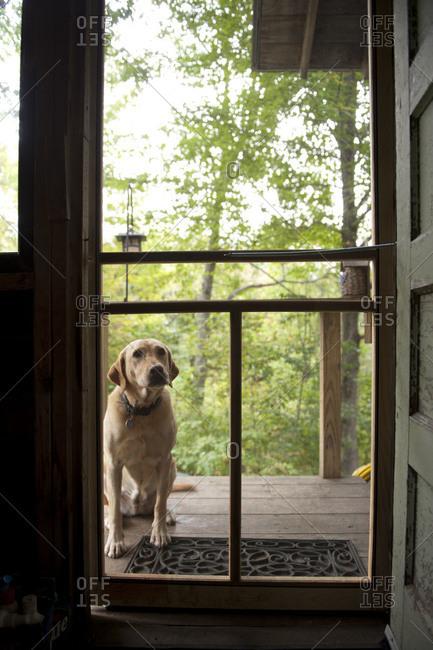 Dog in front of the screen door