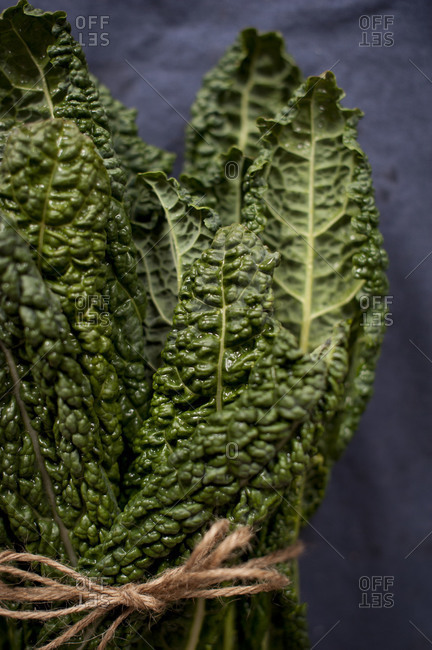 Bunch of lacinato kale, tied with a string
