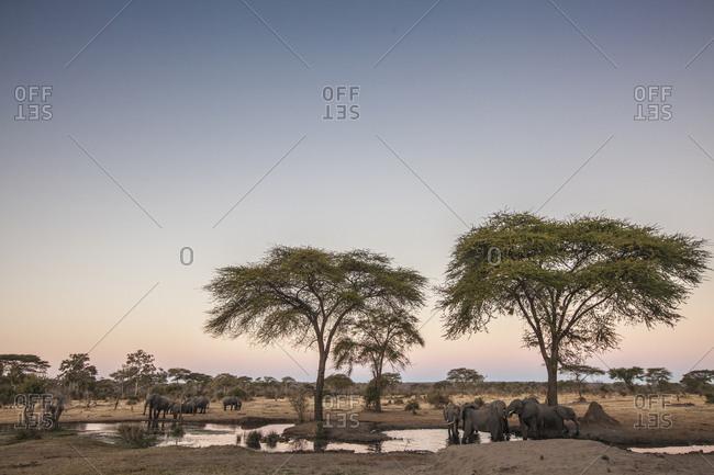 Group of elephants bathing