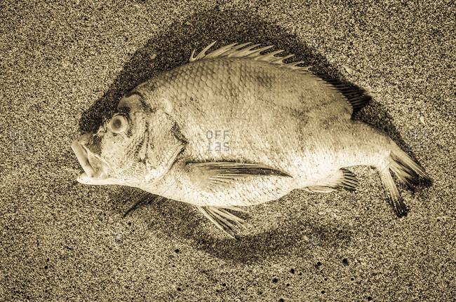 Overhead view of dead fish