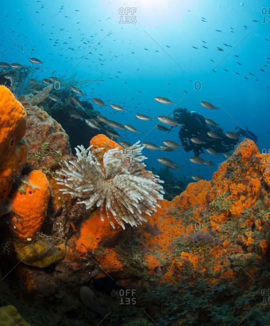 Coral reef scene with scuba diver