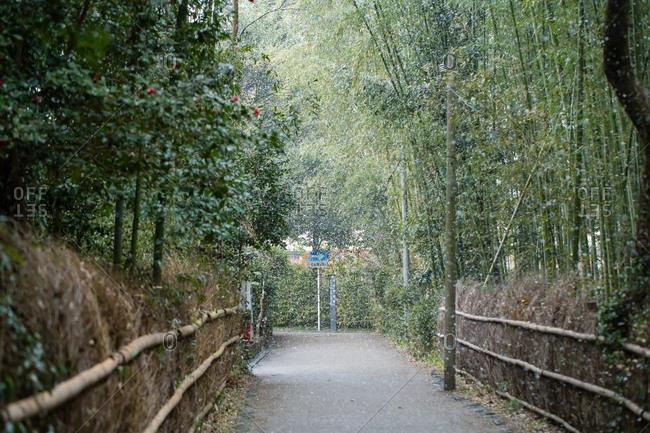 Arashiyama bamboo preserve in Kyoto winter