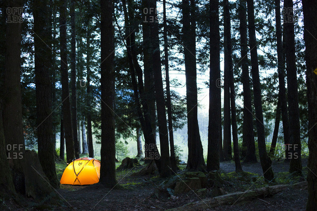 A small tent surrounded by tall trees in a dark forest glows orange with light