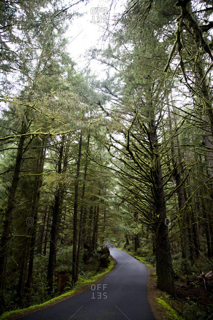 A winding road between tall trees on the saturated Oregon Coast