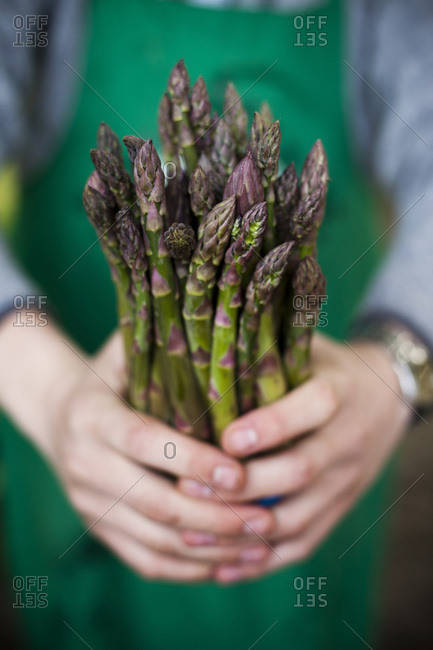 Person holding a bunch of asparagus