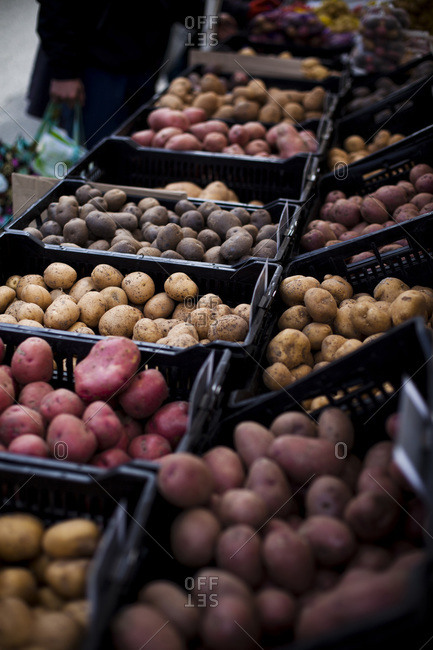 Potatoes lined up at a farmer's market