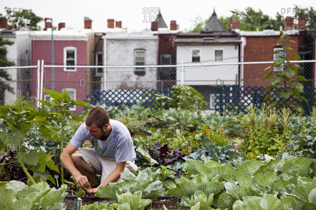 An urban farm in Washington DC, where farmers grow food for the community