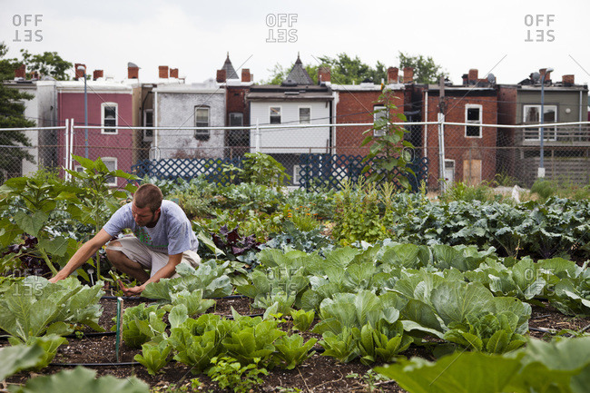 An urban farm in Washington DC, where farmers grow food for the community