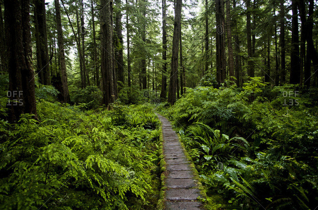 A lush forest and a boardwalk on the coast of Olympic National Park, Washington