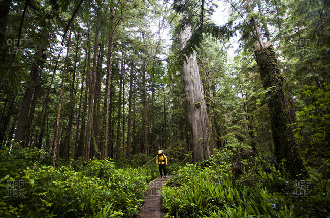 A man walks on a boardwalk beneath a lush forest canopy on the coast of Olympic National Park, Washington