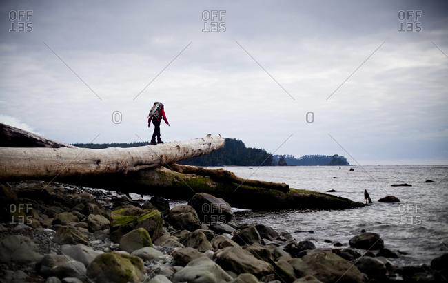 A man walks on a fallen log during a hiking trip coast of Olympic National Park, Washington