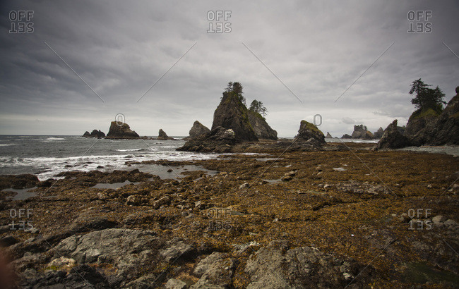 The rocky shore at low tide on the coast of Olympic National Park, Washington