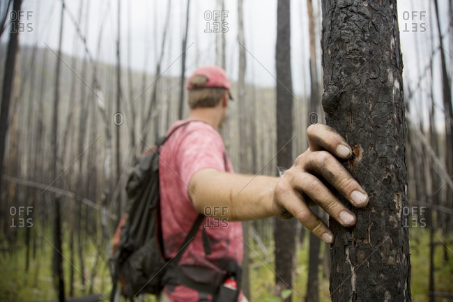 A hiker places his hand on a burnt tree in Glacier National Park, Montana