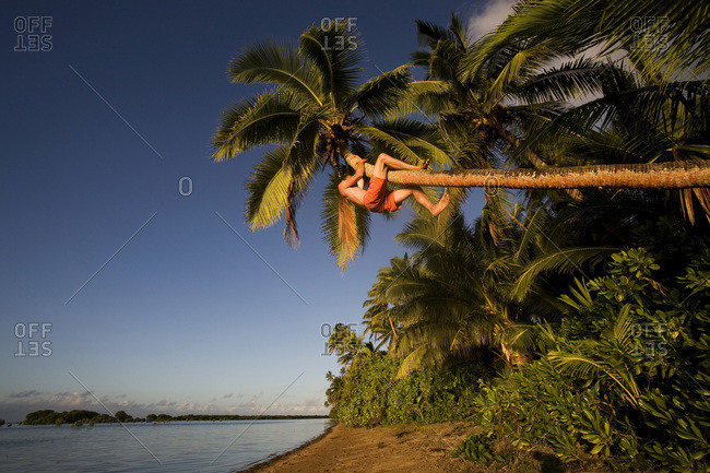 A young man climbs up a leaning palm tree over the beach and water in Fiji