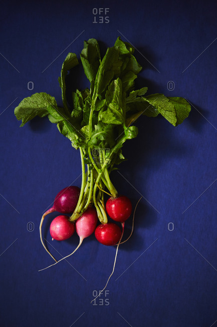 Radishes on a blue background
