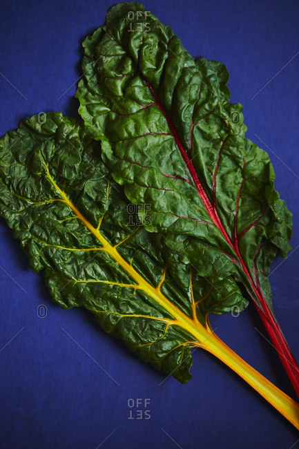 Two varieties of swiss chard