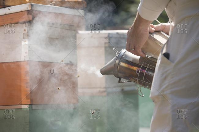 Man in beekeeping suit smoking beehives