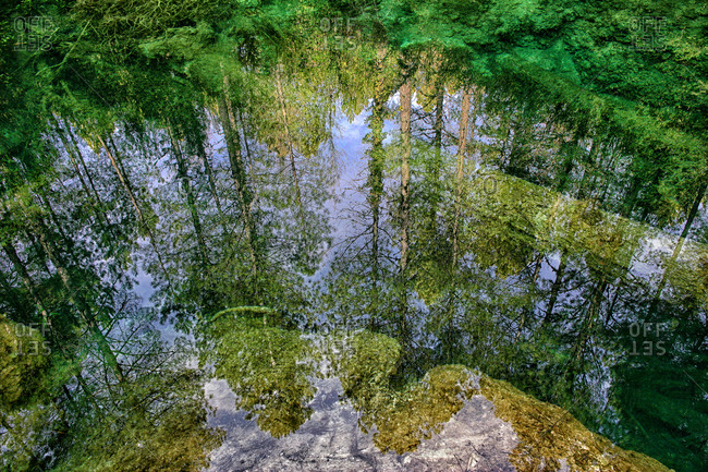 Reflection on water of a forest of black pine (Pinus nigra) in the Natural Park of the Serrania de Cuenca. Castilla la Mancha. Spain