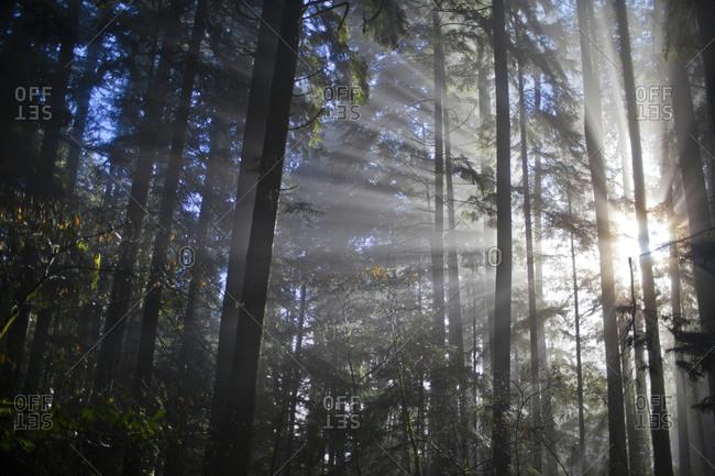 Sun rays shine through the forest