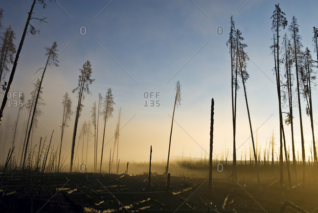 Remnants of the 1988 forest fire still litter the landscape of Yellowstone National Park, Wyoming.