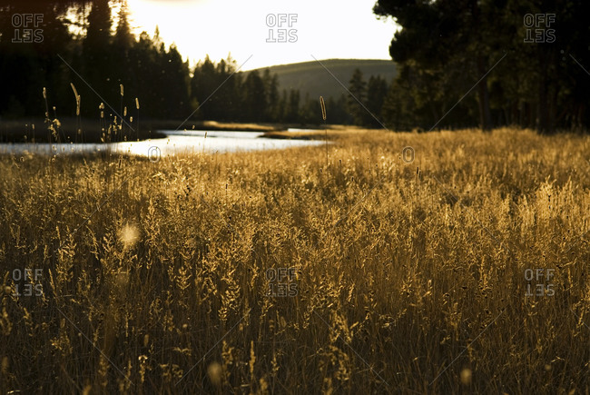 Evening light shines along the banks of a river in Yellowstone National Park, Wyoming.