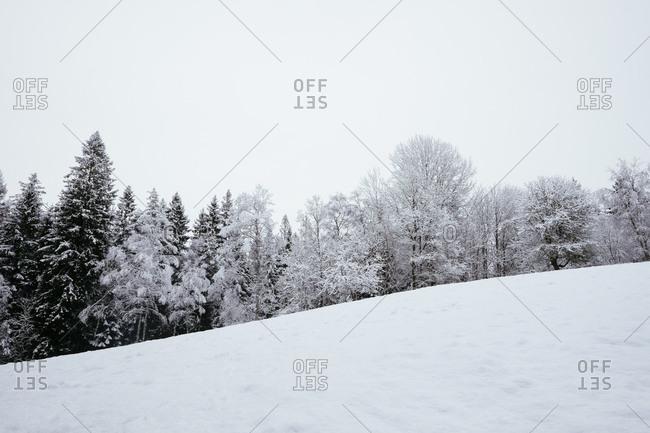 Winter landscape Swedish nature reserve