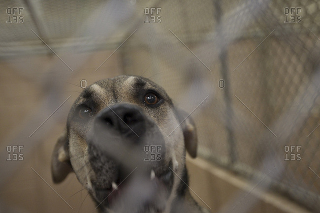 Dog in a cage at an animal shelter, Atlanta, Georgia