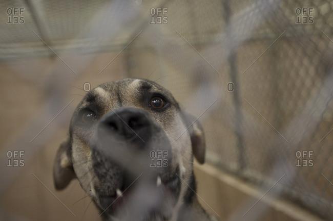 Dog in a cage at an animal shelter, Atlanta, Georgia