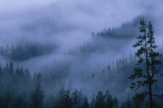Woods shrouded in fog in the Siskiyou National Forest, Oregon