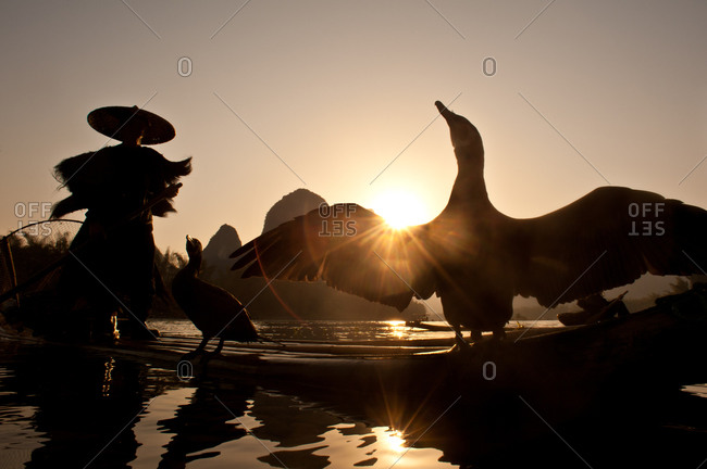A Chinese cormorant fishermen on a bamboo raft with a cormorant bird spreading it's wings, Guilin, Guangxi, China