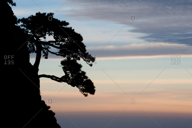 Cliff with tree growing out of it with beautiful sunrise colors in the background