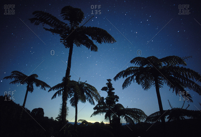 Palm trees under the moonlit sky in the Coromandel Forest Park, New Zealand