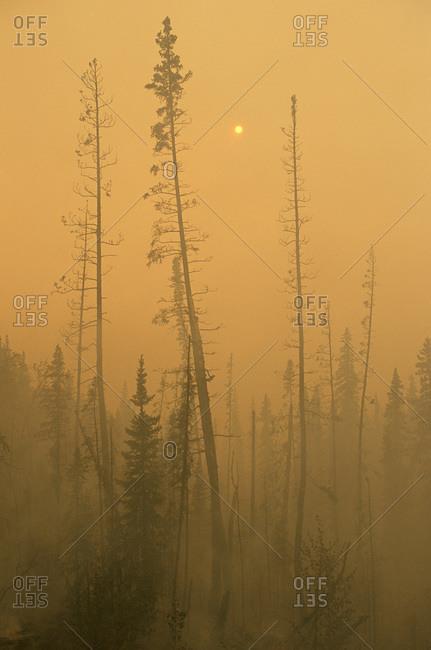 Forest fire north of Fairbanks, Alaska